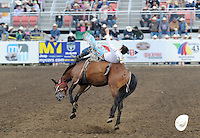 Clint Cannon, from Waller, Texas goes airborne during Friday night's bareback events at the 2013 California Rodeo Salinas.