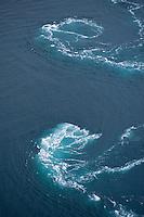 The fastest current, malstroem, in the world - Saltstraumen.Atlantic marine life, Saltstraumen, Bodö, Norway