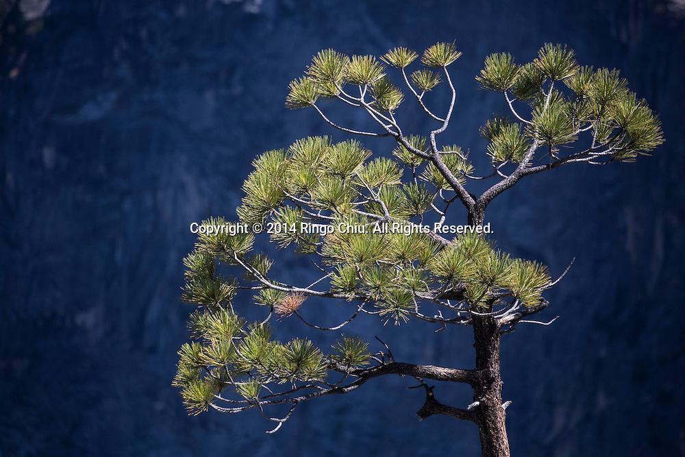 Yosemite National Park, California. (Photo by Ringo Chiu/PHOTOFORMULA.com)