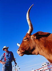 Texas longhorn and blue sky, Fort Worth Stockyards National Historic District, Fort Worth, Texas, USA.
