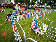 "26 JUNE 2019 - CENTRAL CITY, IOWA: People watch the ""Swifty Swine"" minature pot bellied pig racing at the Linn County Fair. Summer is county fair season in Iowa. Most of Iowa's 99 counties host their county fairs before the Iowa State Fair, August 8-18 this year. The Linn County Fair runs June 26 - 30. The first county fair in Linn County was in 1855. The fair provides opportunities for 4-H members, FFA members and the youth of Linn County to showcase their accomplishments and talents and provide activities, entertainment and learning opportunities to the diverse citizens of Linn County and guests.       <br /> PHOTO BY JACK KURTZ"