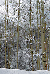 snow covered trees in The Santa Fe Mountains