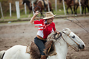 Brazilian Gaucha cowgirl female, riding a horse, lasooing a cow cattle, competing in a Rodeo. Gaucho cowboy Rodeo, Flores de Cunha, Rio Grande do Sul.