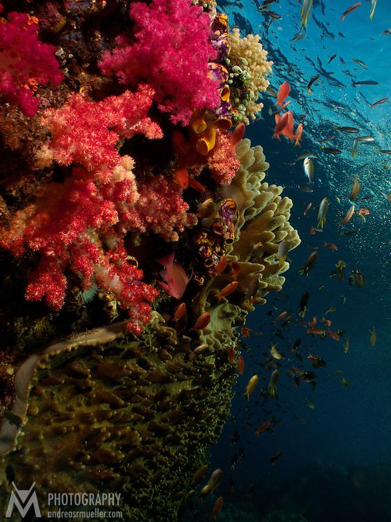 Dive Spot: Weyil Rock