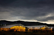 Geothermal energy has also been used for many  purposes. The people in Hveragerði, in Southwest Iceland use it for heating their greenhouses.
