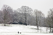 Woman walks dog on winter's day across snow-covered Hampstead Heath, North London, England, United Kingdom