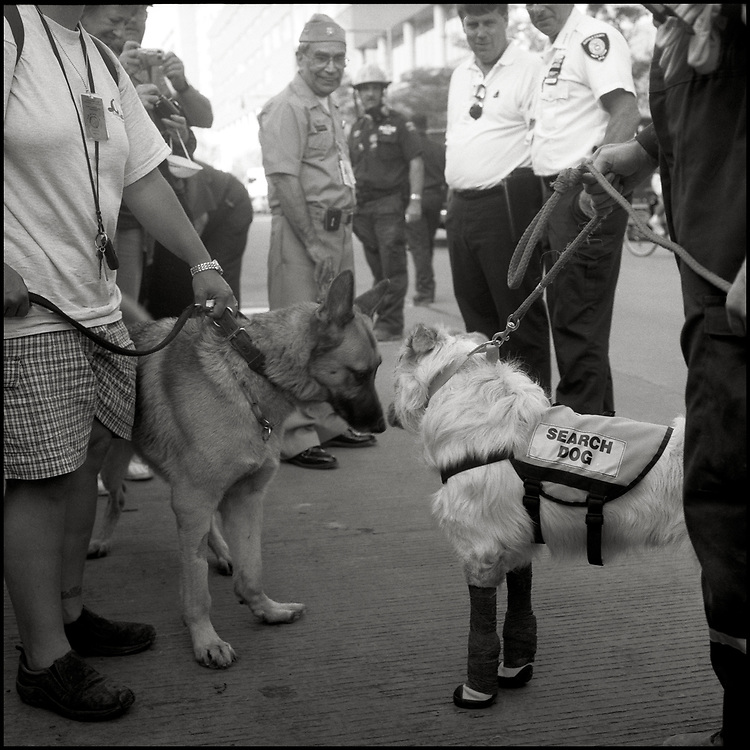 Within hours of the Sept. 11 attacks, thousands of rescue workers from across America deployed to ground zero to help in the search and rescue efforts. Porkchop and Kermit were two of the approximately 300 dogs, specially trained in search and rescue, who joined in the effort.
