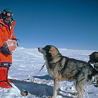 Will Steger teases one of his dogs with one of several hams donated to the canines by staff at America's Amundsen-Scott science base at the South Pole, about halfway through the 1989-1990 Trans-Antarctica Expedition.