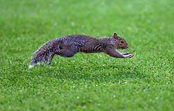 A Squirrel on the pitch