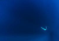 Biak & Cenderawasih Bay National Marine Park, West Papua, Indonesia