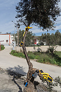Solar panel chargers on an olive tree in the makeshift settlement next to the official Moria refugee camp site is home to an estimated 1500 asylum seekers. Scattered amongst the olive groves, people live in tents and shelters in this unofficial site.