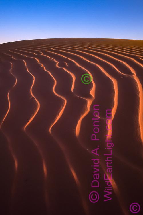 Wind ripples on sandune in the Los Medanos area of southeastern New Mexico. © David A. Ponton