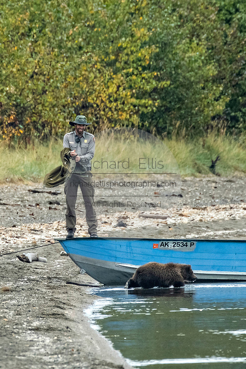 A Park Ranger prevents a young brown bear cub from playing with a boat on the beach at Brooks Camp in Katmai National Park and Preserve September 15, 2019 near King Salmon, Alaska. The park spans the worlds largest salmon run with nearly 62 million salmon migrating through the streams which feeds some of the largest bears in the world.