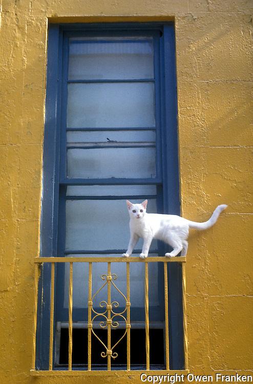 cat on a window in New York City - photograph by Owen Franken