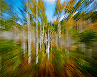 Zooming Through an Autumn Aspen Forest in Colorado. Gone to See America 2013. Image taken with a Nikon 1 V2 camera and 6.7-13 mm VR lens (ISO 160, 13 to 6.7 mm, f/16, 1/8 sec). Colorado Rocky Mountain Photo Safari with Jason Odell.