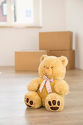 Teddy bear floor alone transport boxes