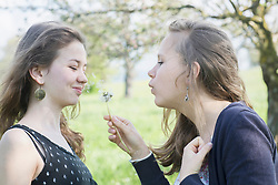 Teenage girl blowing dandelion flower, Freiburg im Breisgau, Baden-Wuerttemberg, Germany