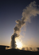 Old Faithful geyser spewing steam on a regular timetable. Photo at sunset