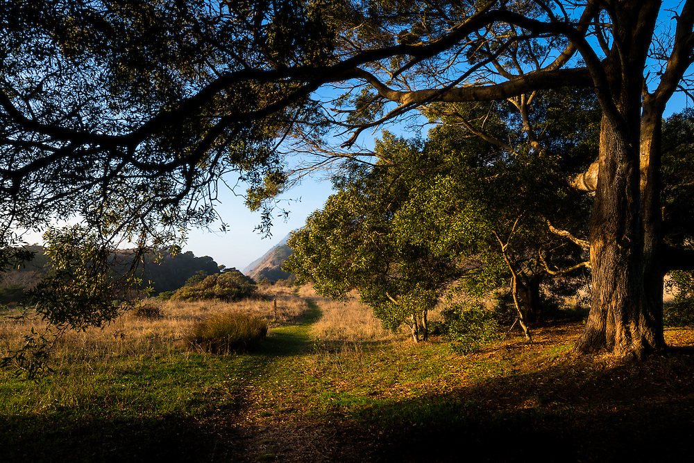 A typical scene along the northern section of the Sinkyone Wilderness with eucalyptus trees looming overhead