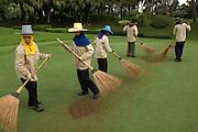 Ground staff, raking the greens of Alpine golf course, near Bangkok