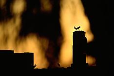 Marrakech Storks