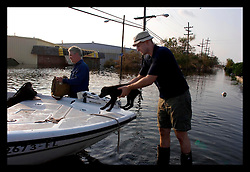 5th Sept, 2005. Hurricane Katrina aftermath. New Orleans. Animal rescue boat. Daily Mirror's Ryan Parry rescues a puppy from the devastating floods in Uptown New Orleans.
