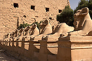 Sphinxes at Temple of Amun at Karnak  Luxor, Egypt