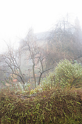 Looking towards the house on a foggy morning at Glebe Cottage