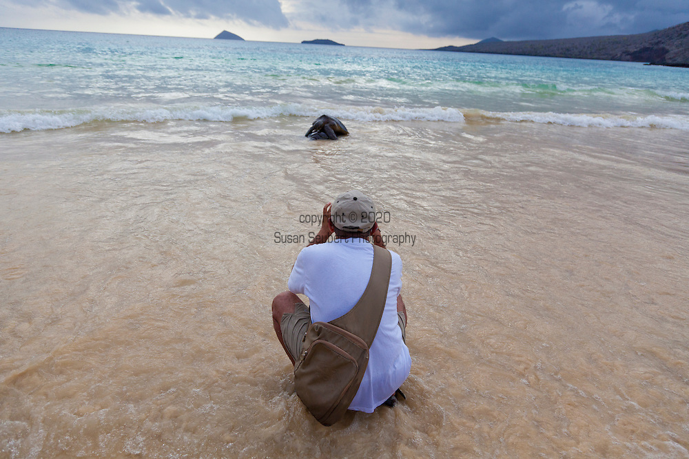 Floreana Island, also known as Charles and Santa Maria,  featuring extinct volcanic cones, scrubby vegetation and a variety of birds, sea lions and sea turtles. Here a photographer takes a picture of a couple of sea turtles mating in the shore surf.