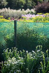 Green mesh netting fence used as windbreak