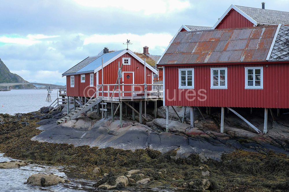 Red-painted rorbu fishermen's cabins in the village of Reine on 25th August 2016 in Lofoten, Norway. The Lofoten islands are famous for their jagged mountains, red-painted rorbu cabins and racks with fish hanging closely packed to dry.