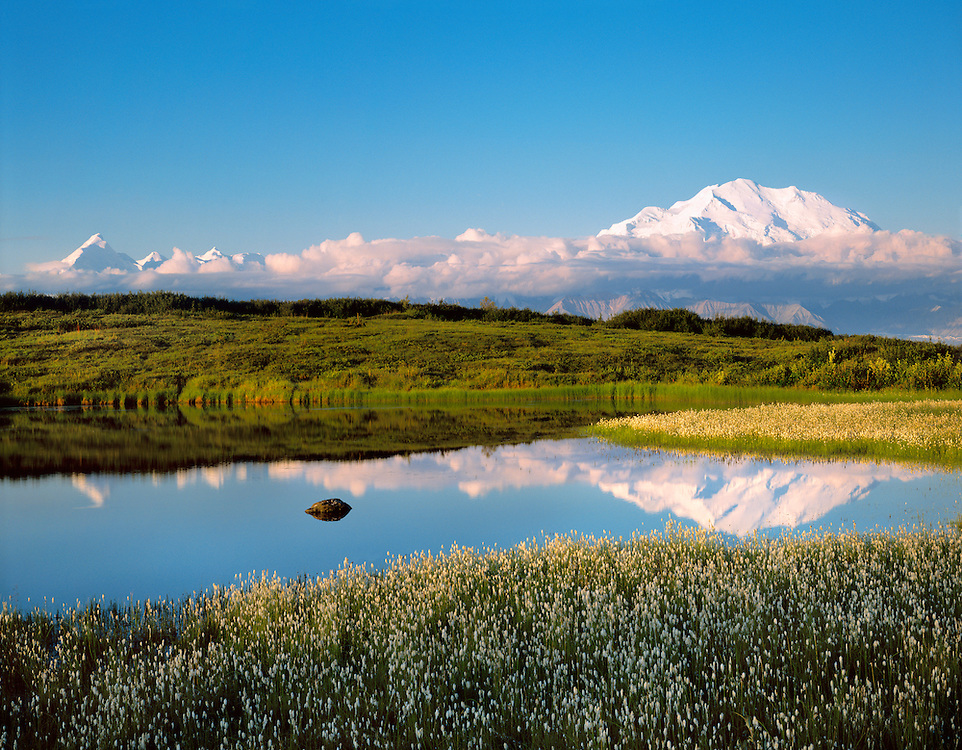 Denali National Park, AK, USA.<br /> Mt. McKinley and the Alaska Range.<br /> Reflection in a kettle pond.<br /> Cottongrass and Tundra.