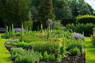 Digitalis and Verbascum phlomoides in the island border at Waterperry Gardens, Waterperry, Wheatley, Oxfordshire, UK