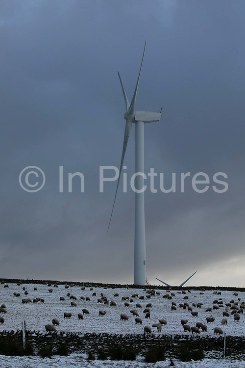 Wind turbines harnessing the natural green energy in the Scottish Borders on 3rd January 2021 in Galashiels, Scotland, United Kingdom. The wind farm, Longpark Wind Farm, is long established and part of the renewable energy production in Scotland. The farm sits in the hills above the village Stow, near Galashields in the Scottish Borders. In between the wind turbines sheep grass in the fields lightly covered by snow.