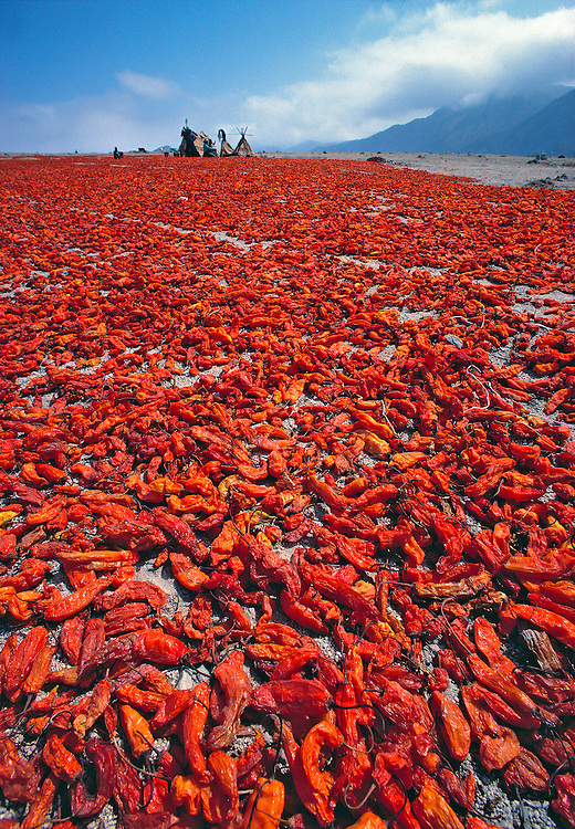 During the chili harvest a gorgeous carpet of crimson and sangria stretches to the horizon, North Coast, Peru.
