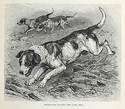 Foxhounds in Full Cry From the book ' Royal Natural History ' Volume 1 Section II Edited by  Richard Lydekker, Published in London by Frederick Warne & Co in 1893-1894