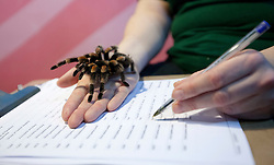 © Licensed to London News Pictures. 04/01/2012. LONDON, UK. Bernie Corbett, a zookeeper at London Zoo, holds a tarantula as part of the zoo's annual stock take today (04/01/12). There are more than 18,000 animals taking up residence at the Regent's Park site, and zookeepers have to make sure each and everyone is accounted for during the check. Photo credit: Matt Cetti-Roberts/LNP