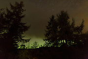 Trees at the Aigas Aigas Field Centre silhouetted against the glow from the Northern Lights.