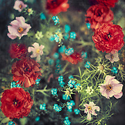 Spring Flowers - double exposure<br /> Society6 prints & more: http://bit.ly/2FOREcr<br /> REDBUBBLE prints & more: http://rdbl.co/2FLOeqR