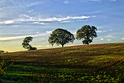 A hillside on a autumn morning outside the village of Orlingbury in northamptonshire