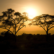 A pair of acacia trees framed against the setting sun at Tarangire National Park in northern Tanzania not far from Ngorongoro Crater and the Serengeti.
