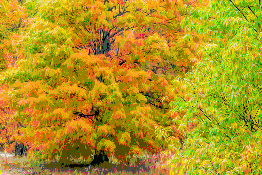 Deciduous forest, autumn, Middle, Michigan, USA