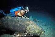Goliath grouper or jewfish, <br /> Epinephelus itajara, on wreck of the Rhone,<br /> British Virgin Islands ( Caribbean Sea )