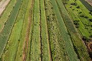 Sugar Cane production<br /> Coastal area<br /> GUYANA<br /> South America