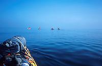 Padlere på rekke og rad i havkajakk, sea kayaks on a row