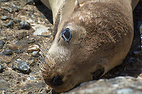 A curious yearling California sea lion near LA's Del Rey Lagoon catches some rays on a beautiful sunny California day.
