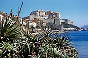 Aloe vera plants with citadel in background, Calvi, Corsica, France in late 1950s