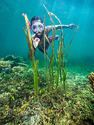Tufi Resort, Papua New Guinea, a free diver on the House Reef