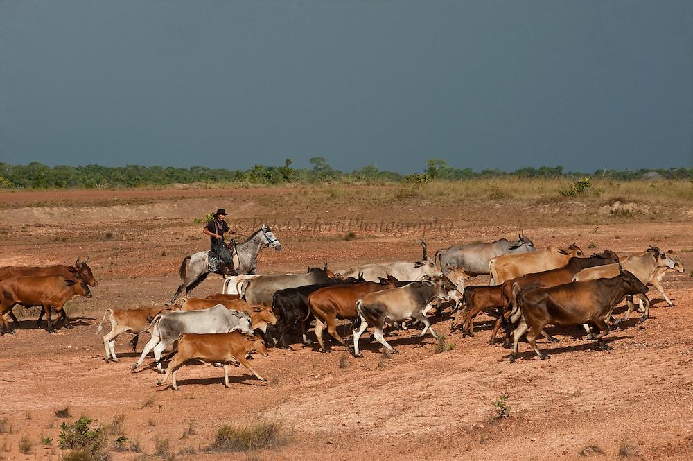 Vaquero (Cowboy) on horseback<br /> Bina Hill<br /> Savannah<br /> Rupununi<br /> GUYANA<br /> South America