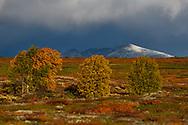 Autumn colors, Dovrefjell National Park, Norway